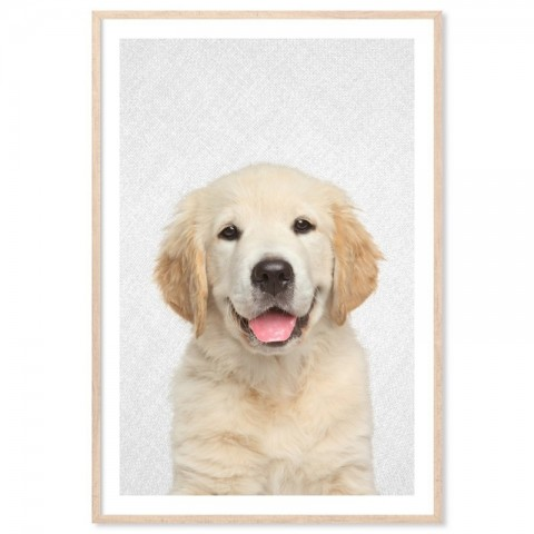 Hello Golden Retriever Art Print