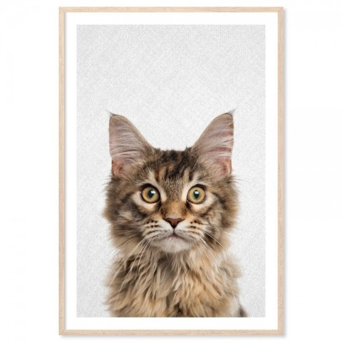 Hello Maine Coon Cat Art Print