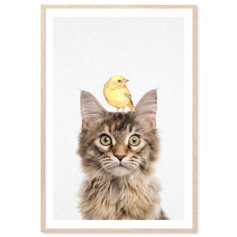 Maine Coon Cat Bird Art Print
