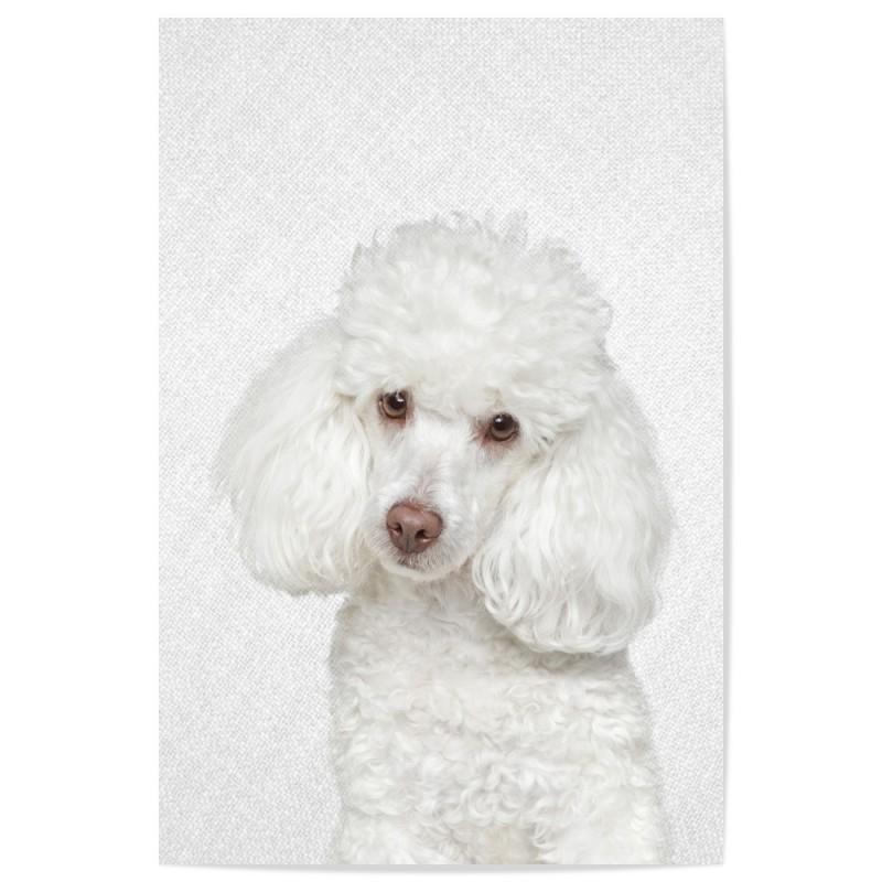 Hello Poodle Art Print