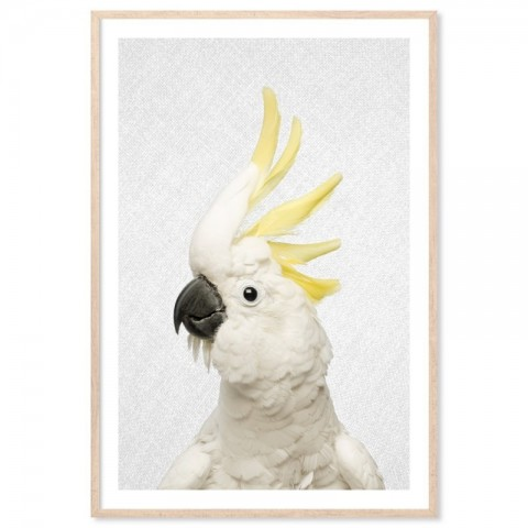 Hello Cockatoo Art Print