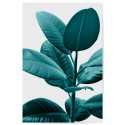 Ficus Rubber Plant Green Download Print