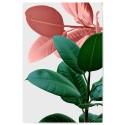 Ficus Rubber Plant Green Orange Download Print