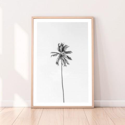 Palm Tree Monochrome Download Print