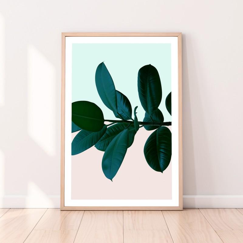 Ficus Rubber Plant Split Download Print