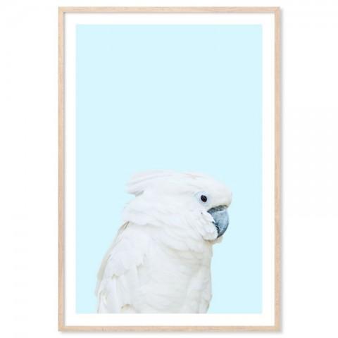 Parrot On Blue Art Print